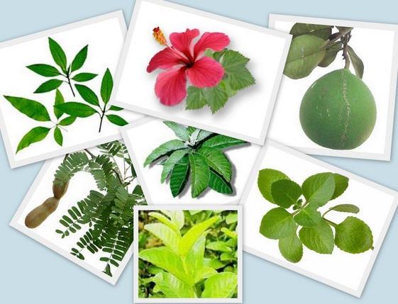 3925073_medicinalplants1 (561x429, 70Kb)