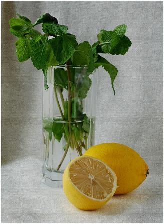 4565946_limon (327x448, 57Kb)