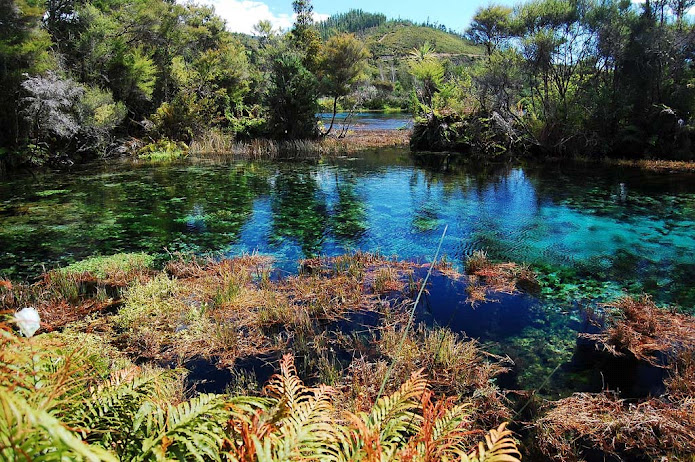 Пупу Спрингс, Новая Зеландия (695x462, 213Kb)