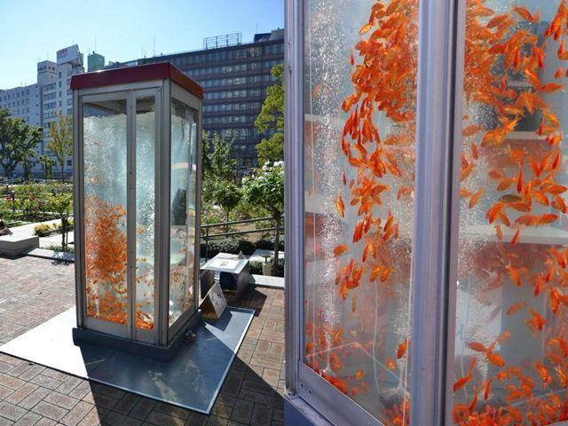 Телефонные будки-аквариумы в Японии. Фотографии