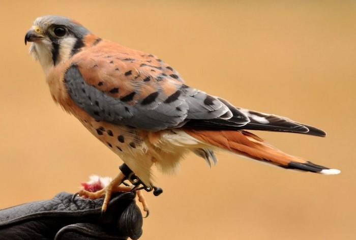 хищных птиц с названиями