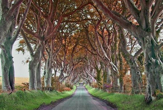 Древесный туннель в Ирландии2 (570x385, 231Kb)