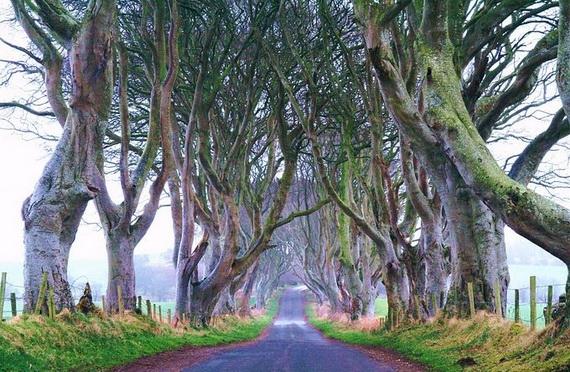 Древесный туннель в Ирландии4 (570x372, 230Kb)
