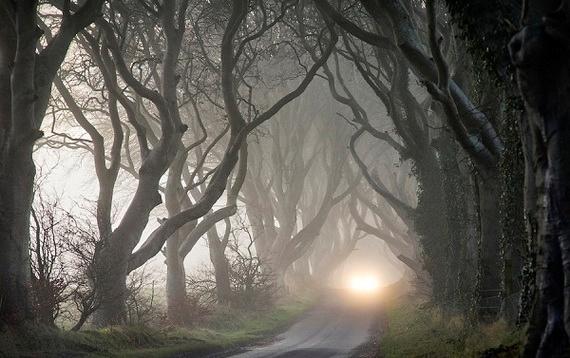 Древесный туннель в Ирландии6 (570x358, 154Kb)