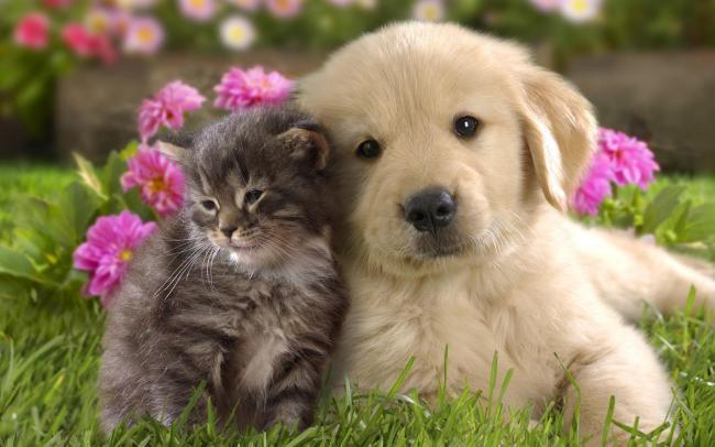 кошка и собака (650x406, 39Kb)