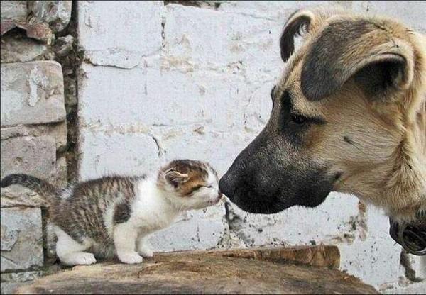 кошка и собака 4 (600x416, 51Kb)