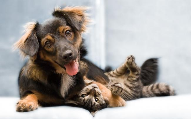 кошка и собака 6 (650x406, 26Kb)