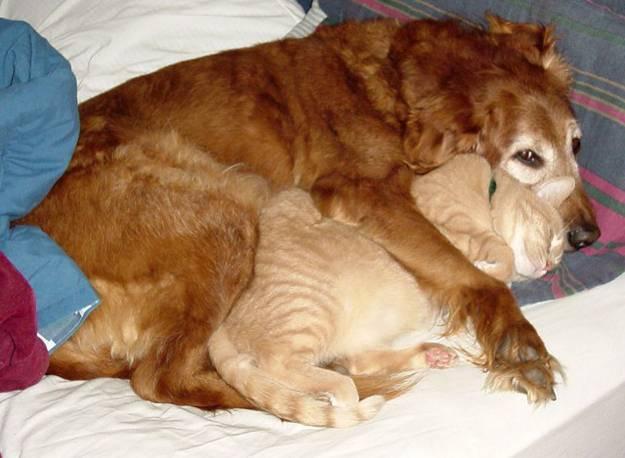 кошка и собака 12 (625x458, 38Kb)