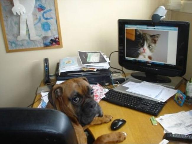 кошка и собака 14 (650x488, 36Kb)