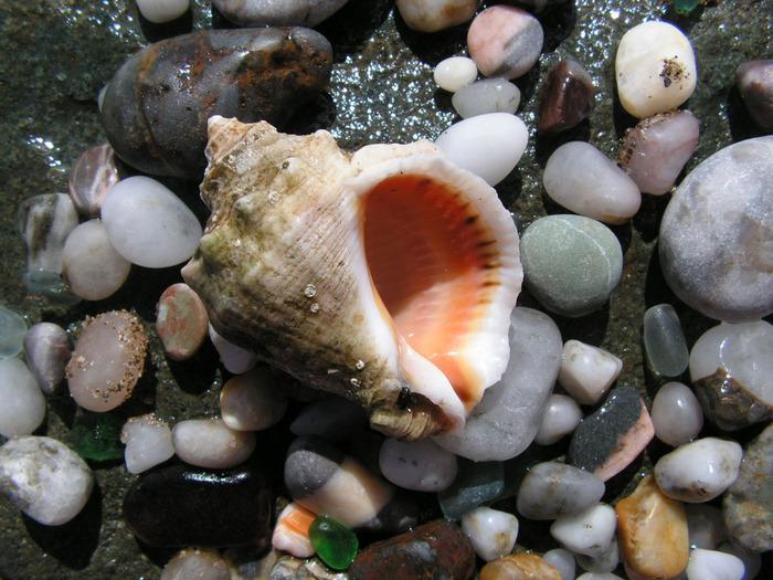 ...и теплый песок, что может быть прекрасней:) В этой подборке, собраны красивые фотографии разных морских ракушек.