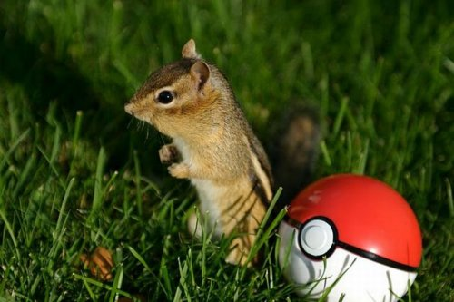 1280764911_1280518197_cute_squirrels_10 (500x330, 36Kb)