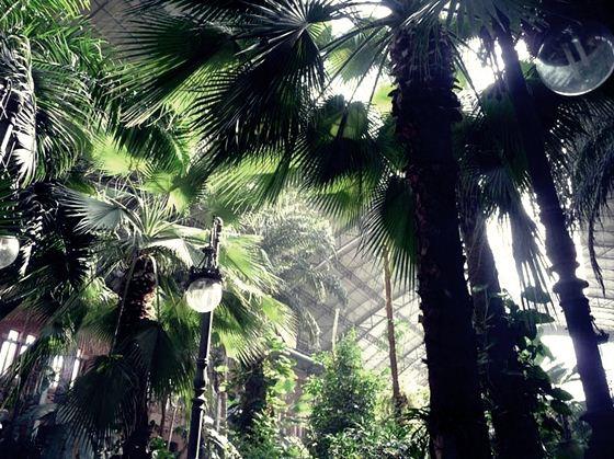 botanic (2) (560x419, 78Kb)