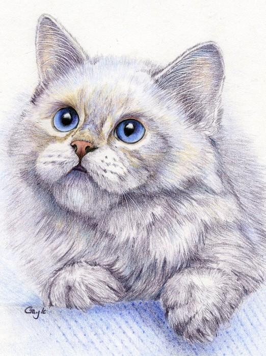 рисунки зверей цветными карандашами:
