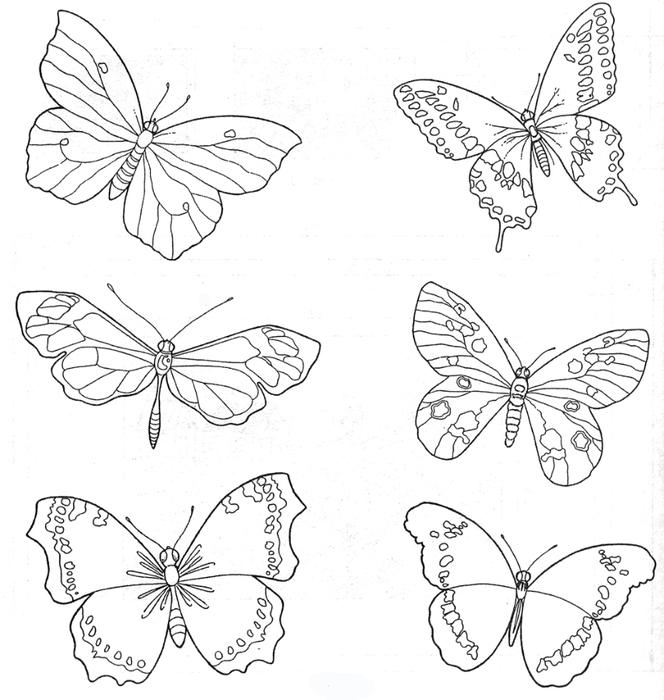 Картинки бабочек и цветов нарисованные 6