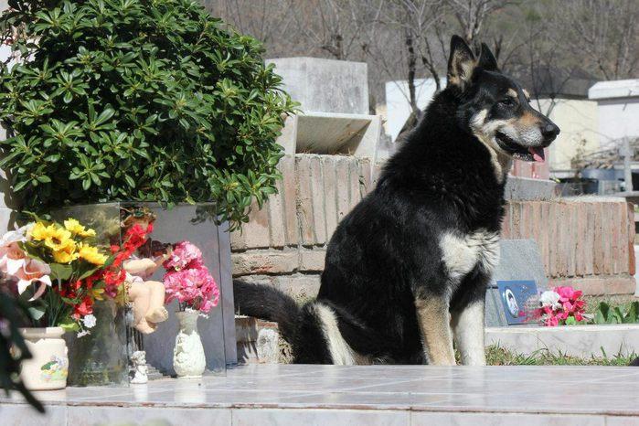 собачья верность 7 (700x466, 83Kb)