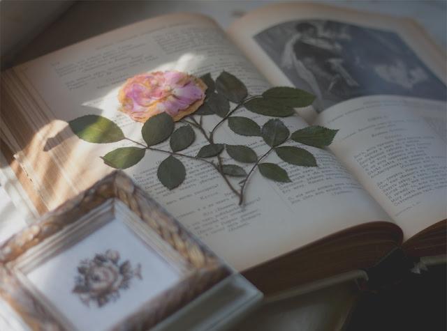 Стихи Пушкина, стих цветок,сушеные цветы (640x475, 140Kb)