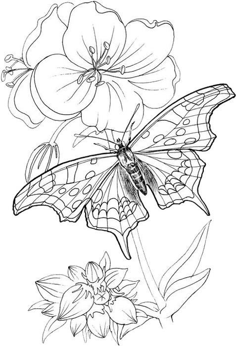 Картинки бабочек и цветов раскраски 8