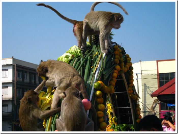 фестиваль обезьян в таиланде 2 (700x529, 640Kb)