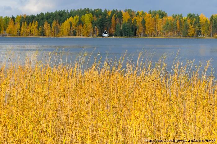 finland_ruska (700x464, 401Kb)