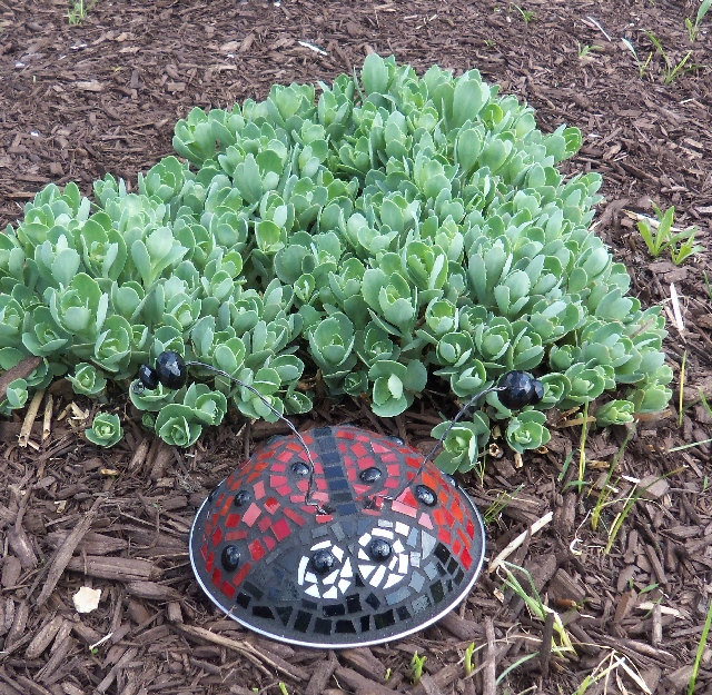 ladybug (1) (640x625, 217Kb)