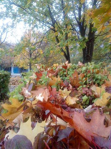 листья (360x480, 62Kb)