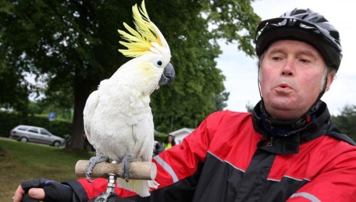 Попугай Роберт - Ну что за птичка ! 80033