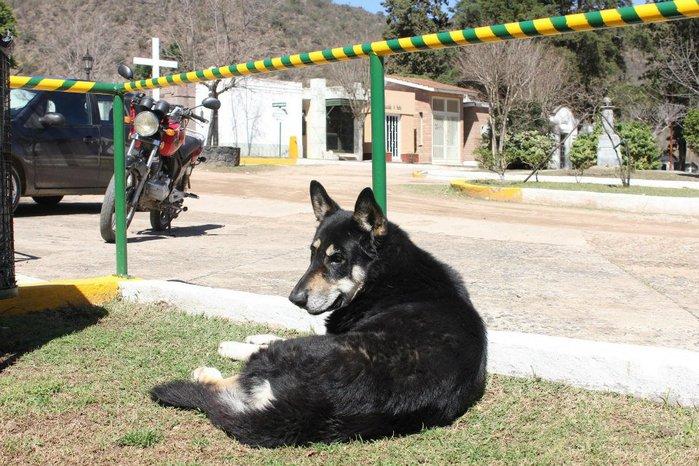 dog-5 (700x466, 108Kb)