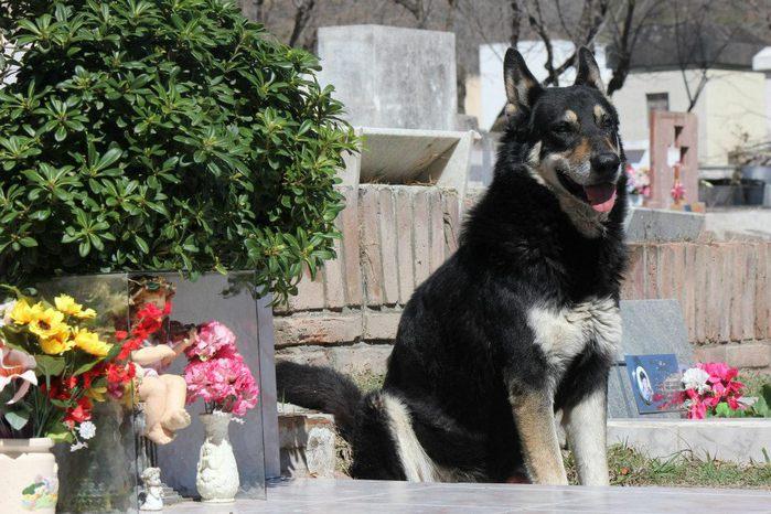 dog-10 (700x466, 85Kb)