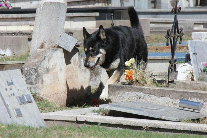 dog-2 (700x466, 70Kb)