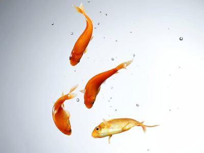 золотые рыбки (400x300, 9Kb)