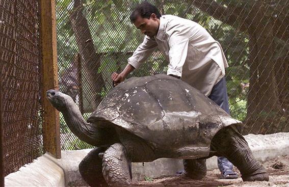 10 животных, которые живут дольше человека