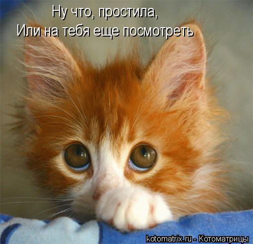 kotomatritsa_4 (510x493, 38Kb)
