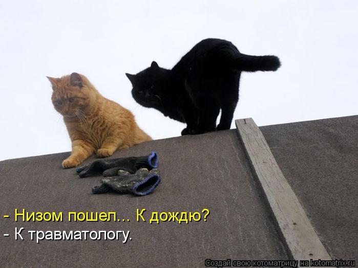 kotomatritsa_8U (700x524, 42Kb)