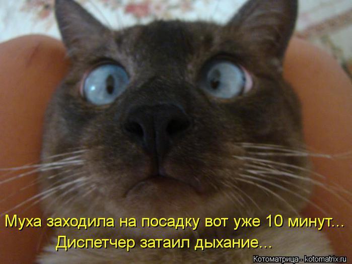 kotomatritsa_GC (700x524, 41Kb)