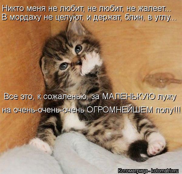 kotomatritsa_K- (600x574, 66Kb)