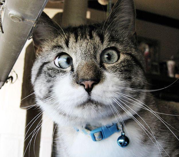 Косоглазый кот. (625x548, 65Kb)
