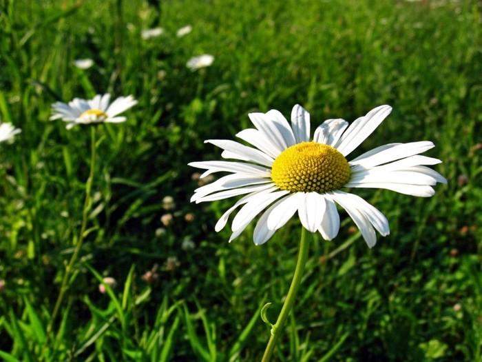 26192470_1212254510_flowers_800x6001 (700x525, 97Kb)