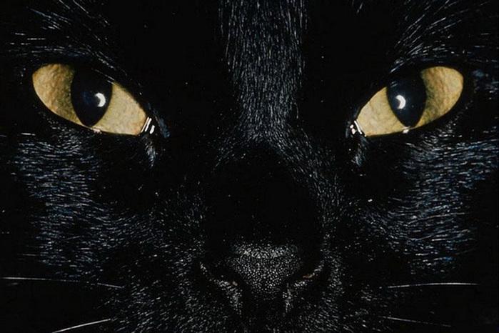 cats-mixstuff-2 (700x466, 114Kb)