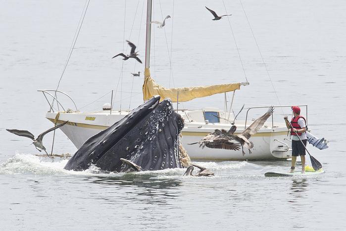 кит1 (700x466, 153Kb)
