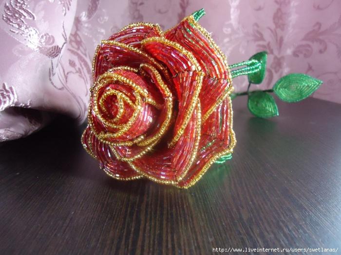 Роза из рубки.