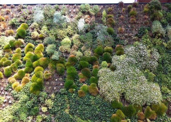 cамый большой вертикальный сад в мире7 (570x405, 269Kb)