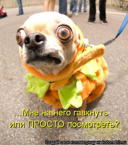 kotomatritsa_Op (495x560, 52Kb)