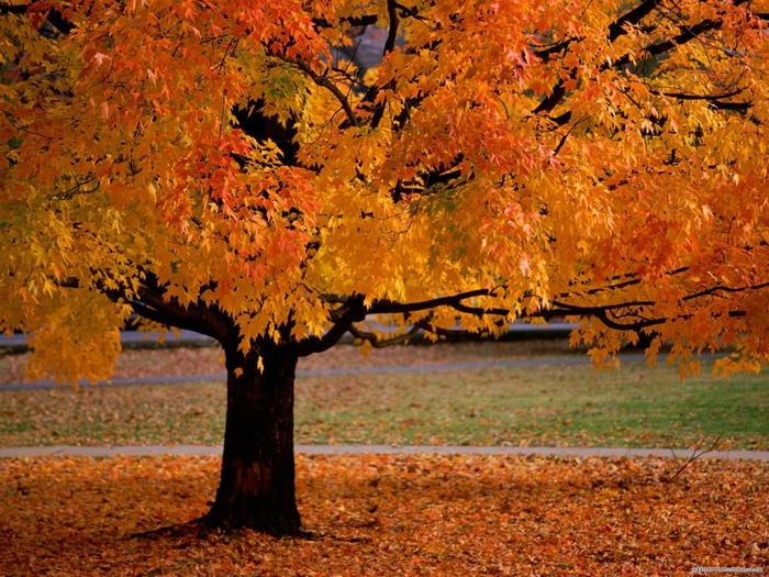 Осень - рыжая девчонка...