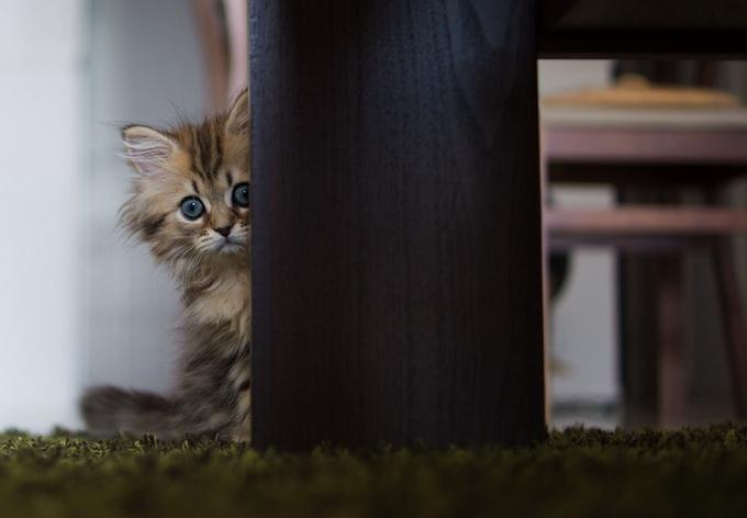 Самый очаровательный котенок в мире1 (680x472, 63Kb)