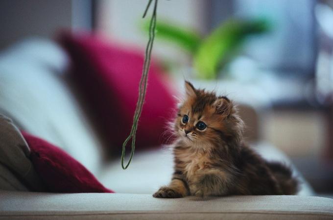 Самый очаровательный котенок в мире5 (680x451, 76Kb)