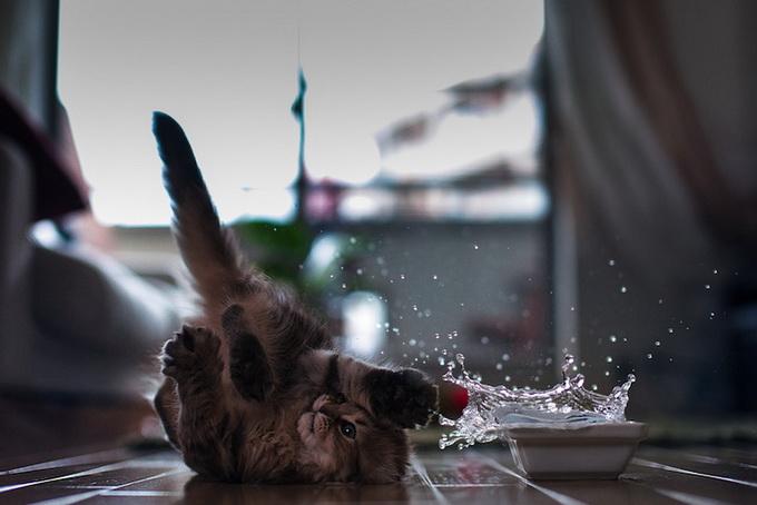 Самый очаровательный котенок в мире7 (680x454, 78Kb)