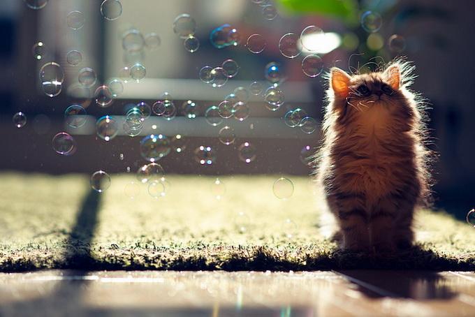 Самый очаровательный котенок в мире9 (680x454, 122Kb)