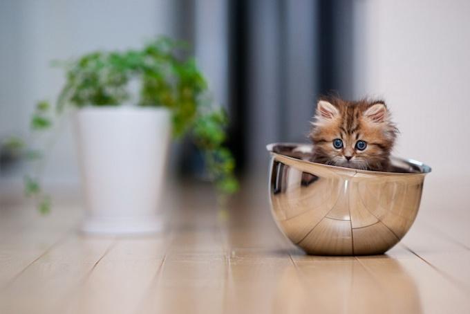 Самый очаровательный котенок в мире11 (680x454, 70Kb)