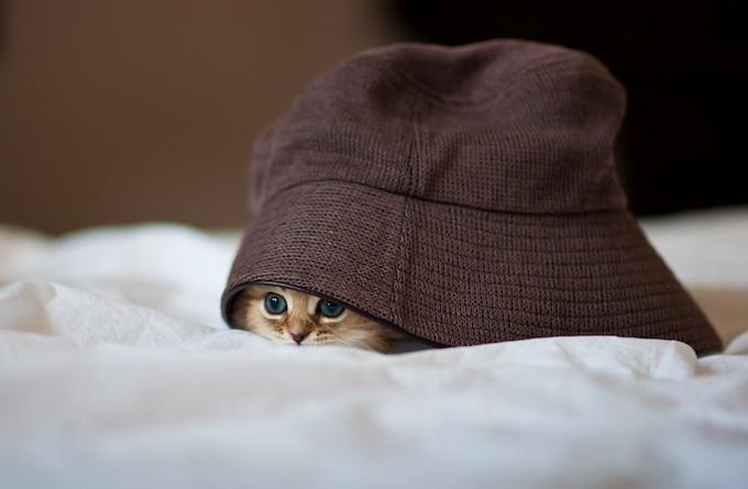 Самый очаровательный котенок в мире15 (680x445, 74Kb)