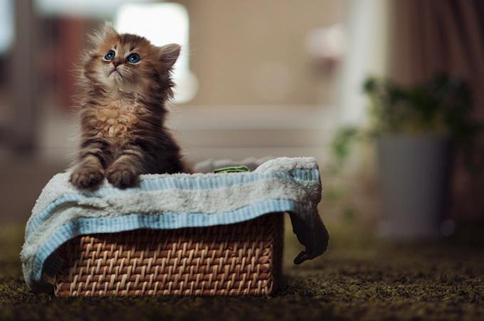 Самый очаровательный котенок в мире17 (680x452, 88Kb)